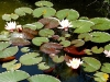 waterlilies-06.jpg