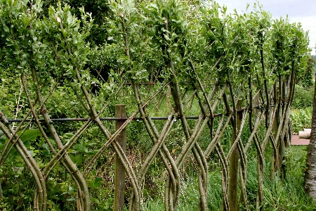 "<em/>willow fencing at La Roche Jagu"" title=""jagu-fence450″ width=""450″ height=""300″ class=""size-full wp-image-456″ /><p id="