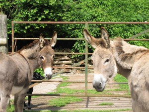 My Donkeys!