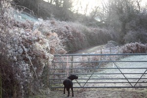 Millie in frost