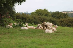 Lambs in Pastures New!